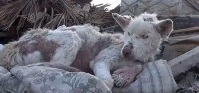 Σκύλος έκανε κάτι απίστευτο μετά τη διάσωση του.