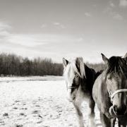 Η τραγική ιστορία των αλόγων στις ΗΠΑ μέσα από εκπληκτικές φωτογραφίες