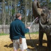 Τι συμβαίνει, όταν ένας μικρό ελέφαντας πρέπει να κάνει μπάνιο.