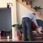 Η εκδίκηση της γάτας!