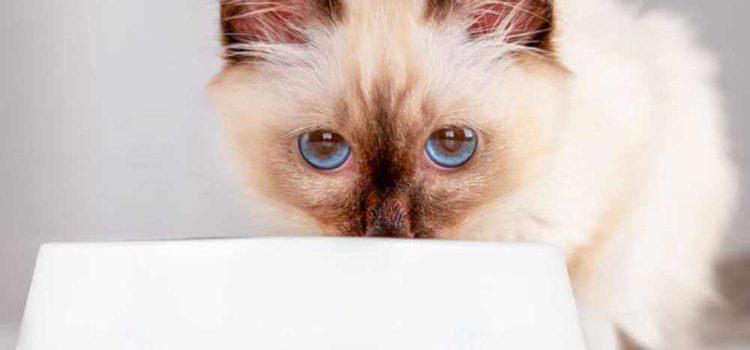 Τι θα χρειαστώ αν πάρω ένα νέο γατάκι