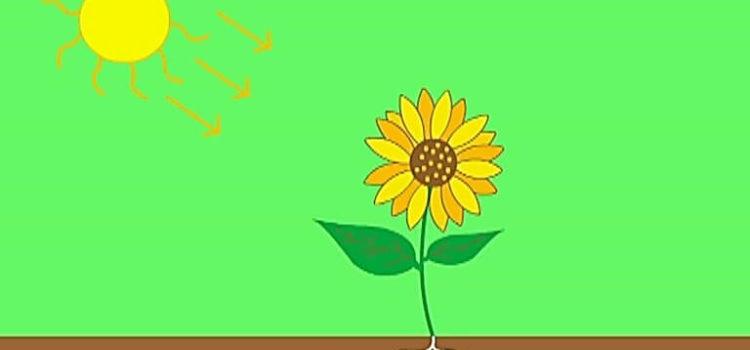 Τι είναι η φωτοσύνθεση των φυτών