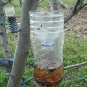Παγίδα για σφήκες και άλλα έντομα