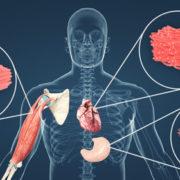Συστήματα του σώματος