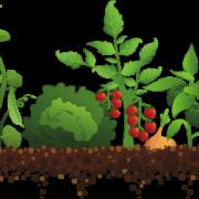 Χρόνος και απόδοση καλλιέργειας λαχανικών
