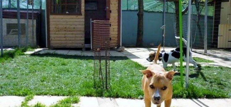 4 Λόγοι για να ανοίξετε την δική σας πανσιόν σκύλων